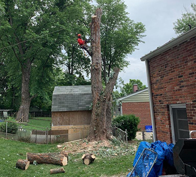 Professional Storm Damaged Tree Removal