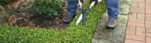 Professional Gardeners and Landscapers